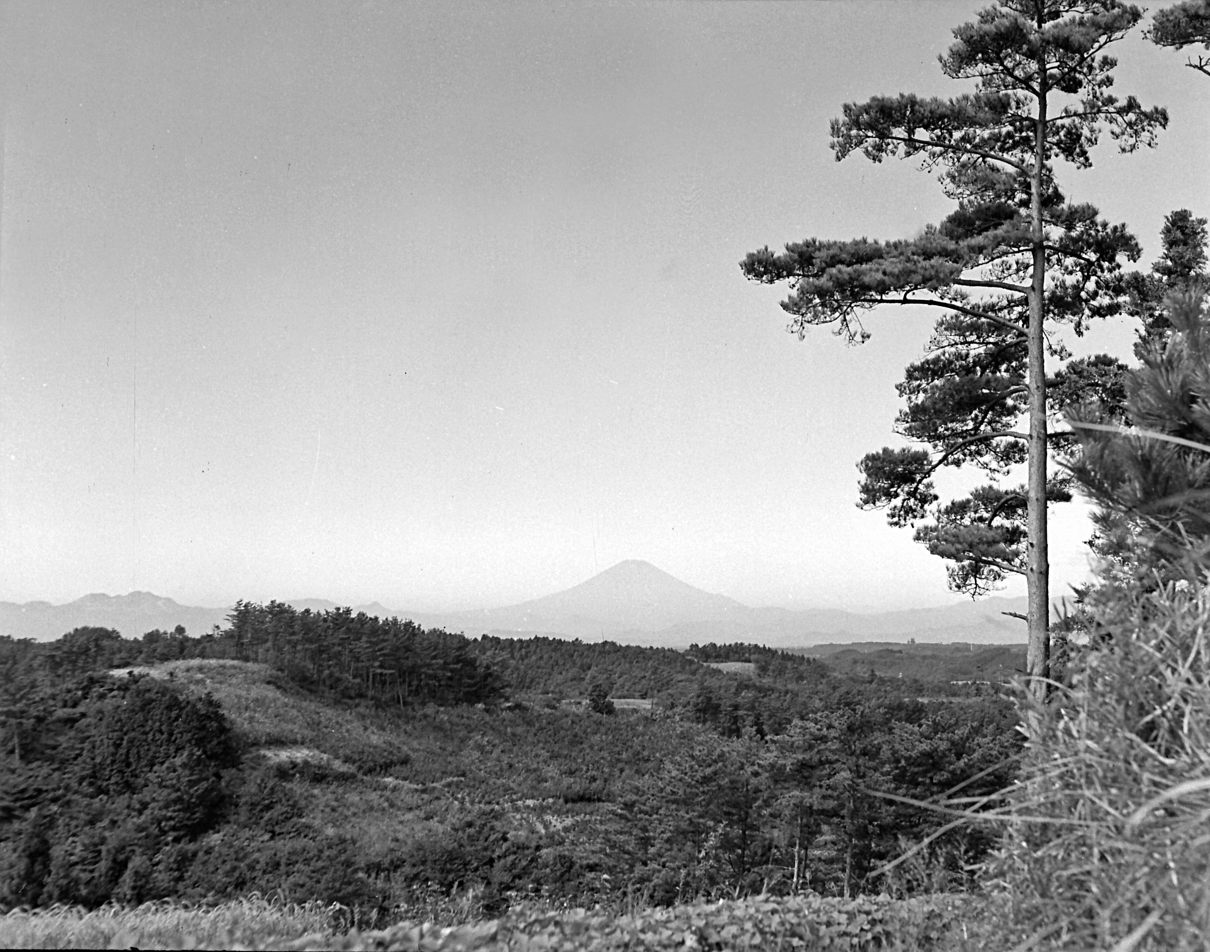 台峰の山畑1955年